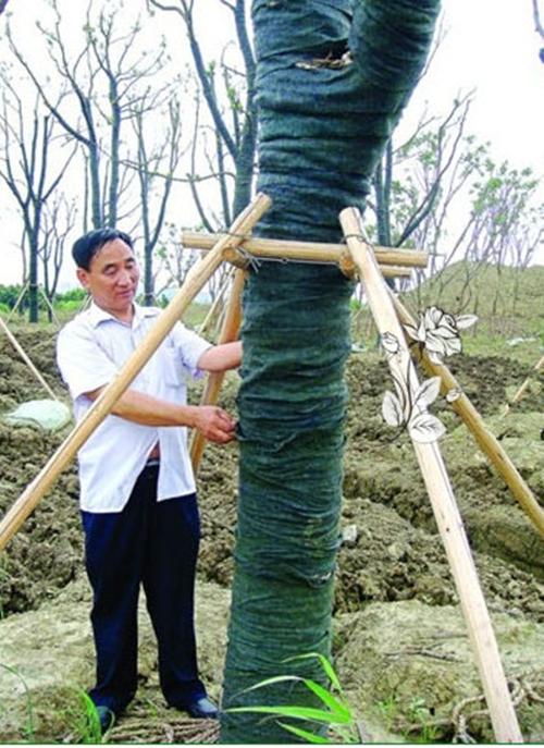 冬季大树小树防寒带保温层次标准